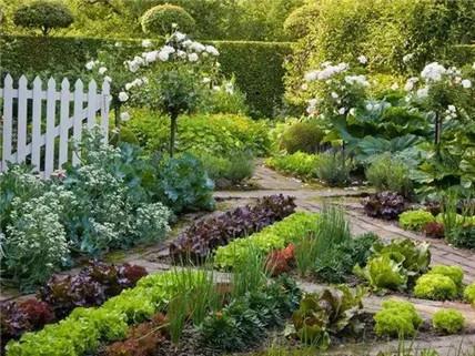 01自家小院的蔬菜花园-造一个菜园,比花园还美