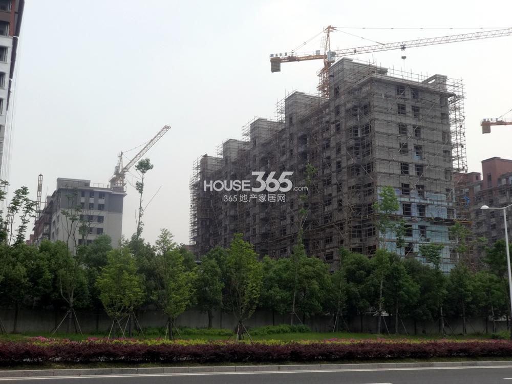 高科荣境在建楼栋实景图(5.15)