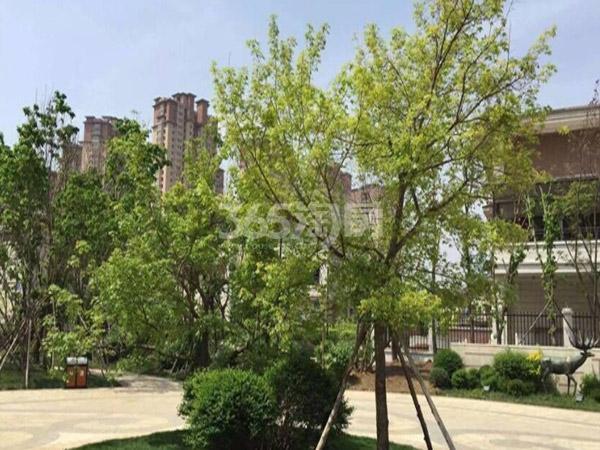 奥园国际城 实景图
