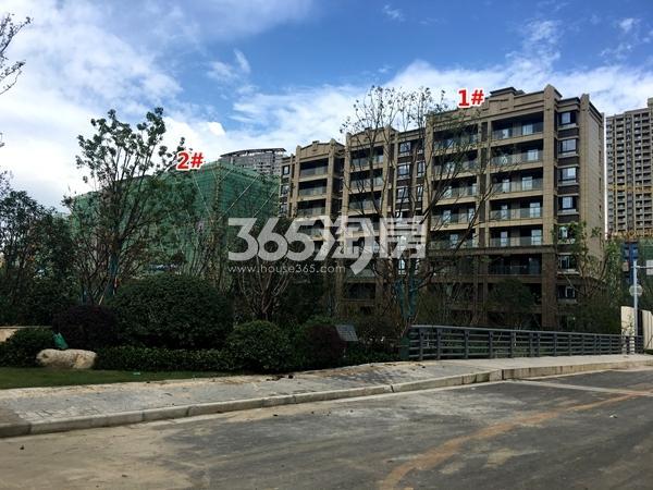 苏宁悦城四期1#、2#楼洋房实景图(2017.9摄)